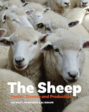 book cover for The Sheep
